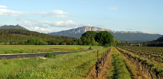 Côteaux du Languedoc