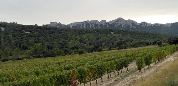 Côteaux du Languedoc, Pic-Saint-Loup