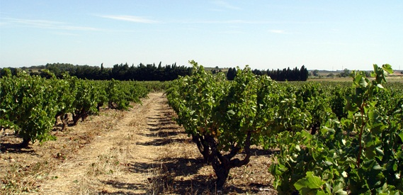 Côtes du Roussillon