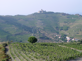 Neue Rotweine 2016, Altagsweine