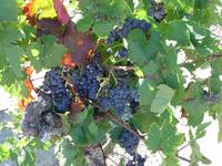 Neue Rotweine 2016, Die Gute Mitte