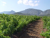 Top Rotweine aus dem Roussillon 2016