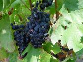 Großes Probierpaket Minervois Rotweine