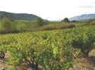 Les Vignerons de Maury